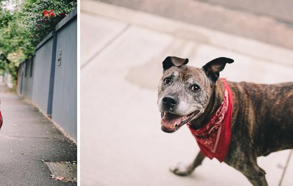 Bosko and his Tatianna | Pet Photography | Manly, Australia